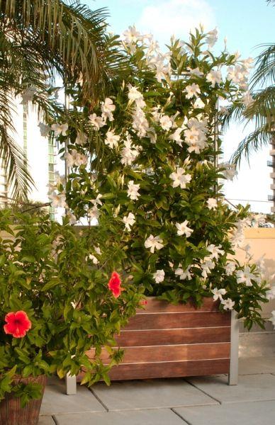 plantador jardineras grandes jardineras de madera jardinera elevada pequeo patio macetas de jardn ideas del patio metal trellis