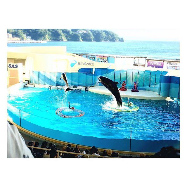 【anyachan78】さんのInstagramをピンしています。 《Dolphin show at Enoshima⭐️🐬⭐️ 久しぶりに見たイルカショーは歌と踊りと衣装も まるでシルクドゥソレイユみたい☀️🐠🌴💕 #新江ノ島水族館 #イルカショー #dolphin #水族館 #aquarium #話題の #ナイトアクアリウム #show #シルクドゥソレイユ #イルカ #江ノ島 #夏の思い出 #summer2016 #湘南 #イルカと泳ぎたい #金槌 #やっぱり海の近くに住みたい #江ノ島散策 #beach #海 #さかなくん》