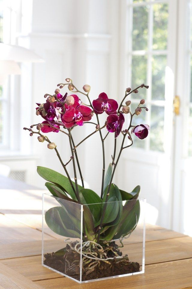 Orchideen-Pflege wurzeln durchsichtige kunststoff behälter quadrat