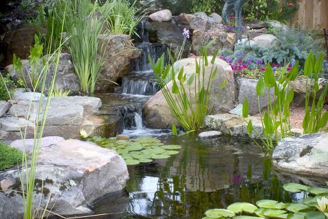 25 best ideas about patio pond on pinterest container for Small pond care