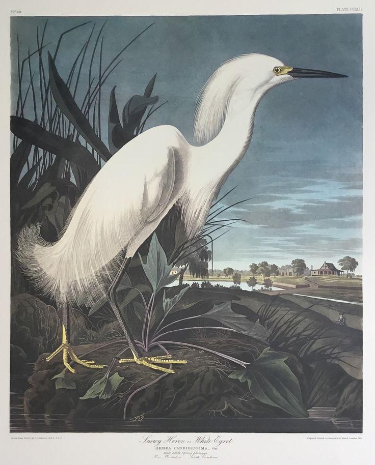 Special offer - Snowy Egret trimmed