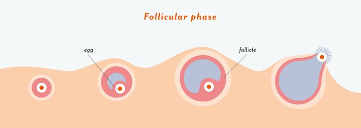 Ovulation 101: What is it & how does it work? – Clued In – Medium