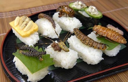 Bug sushi Why not.............. Andrew Zimmerman Here I come :)