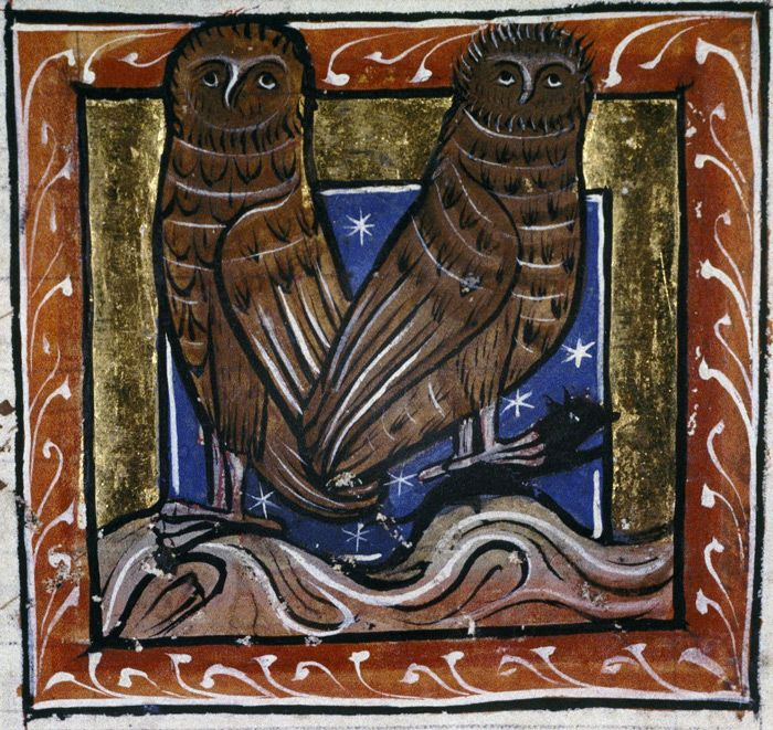 Two night-owls (noctua), one clutching a small animal in tis calws. Bodleian, MS. Bodley 764, Folio 73r