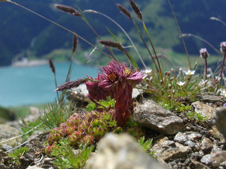 Gesehen auf ca. 2000 m unterhalb der Klopairspitze in Reschen. Tief unten der Reschensee. http://www.alpinresort.it/hotel-reschen-reschenpass/bergsommer-bei-uns/