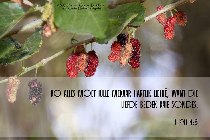 Bybelverse 1 Pet 4:8 Bo alles moet julle mekaar hartlik liefhê, want die liefde bedek baie sondes.