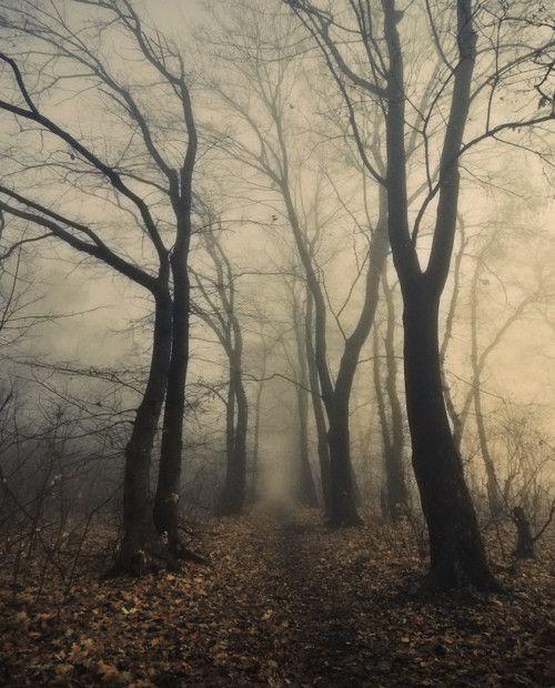 Dimitri Bogachuk: Paths, Walks, Christmas Holidays, Winter Trees, Beautiful, Sleepy Hollow, Dark Forests, Into The Wood, Halloween