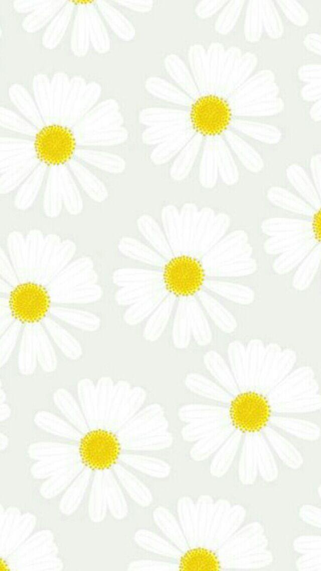 Grey white yellow daisies daisy flowers iphone phone