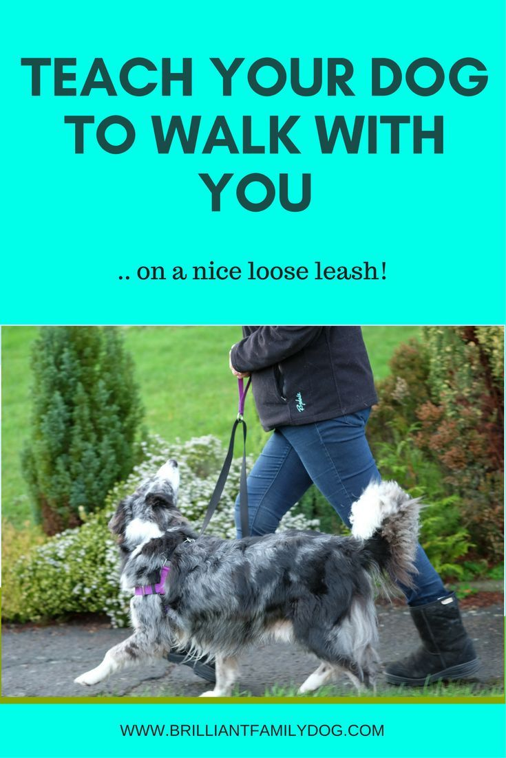 Dog Training Puppy Training Loose Leash Walking Dog Walk How