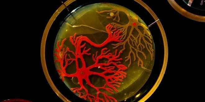 Piastra di Petri: Dei batteri che diventano veri dipinti La piastra di Petri o capsula di Petri è un recipiente piatto di vetro o plastica, solitamente di forma cilindrica; è un importante strumento di lavoro in molti campi della biologia, per la crescita