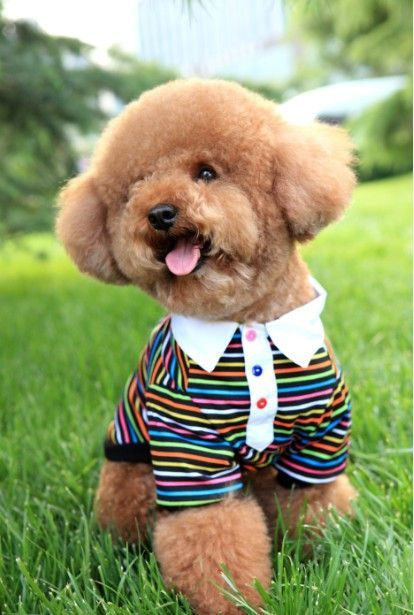 Adorable Dog Fashion Rainbow Striped T-Shirt for Shop Pet Clothes & Apparel