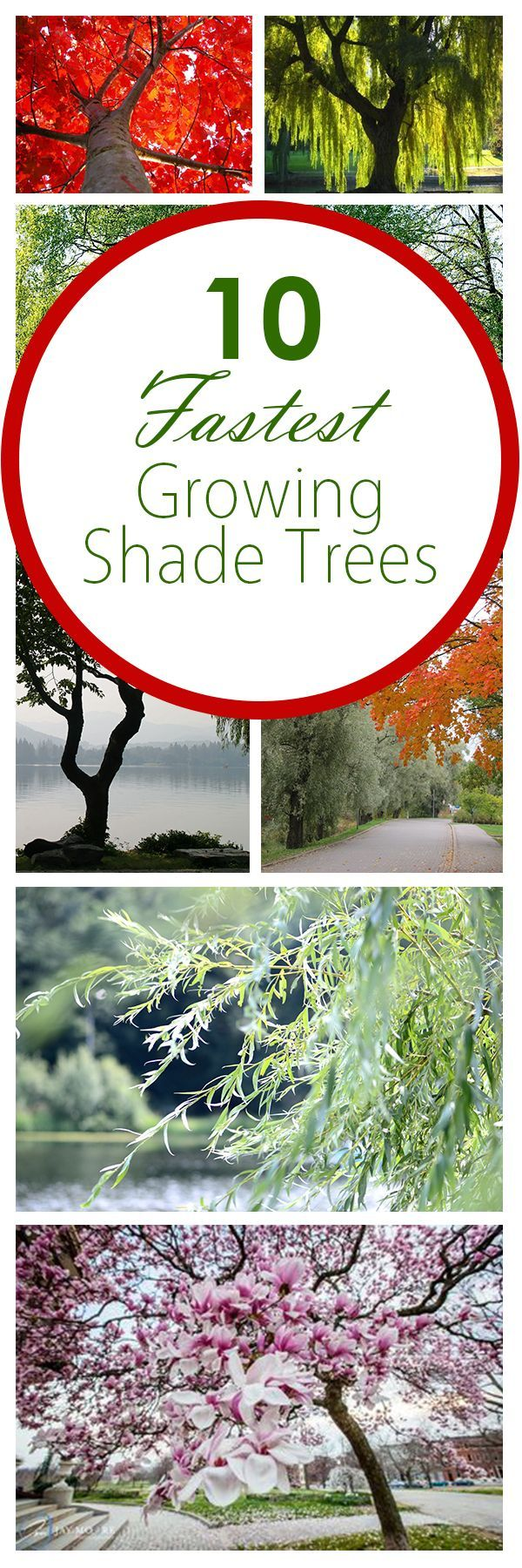 Shade trees, gardening with trees, gardening, popular pins, landscaping, landscaping ideas, tips and tricks, growing trees.