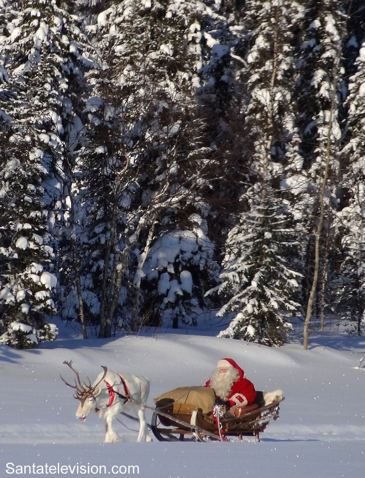 Santa Claus having a reindeer ride in the forest of Finnish Lapland