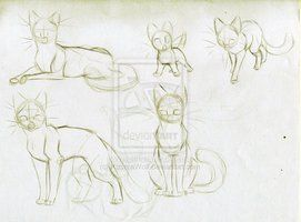 warrior cats dawnclan  warrior cat poses 1 dawnclan
