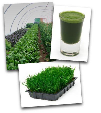 The Green Bowl Company