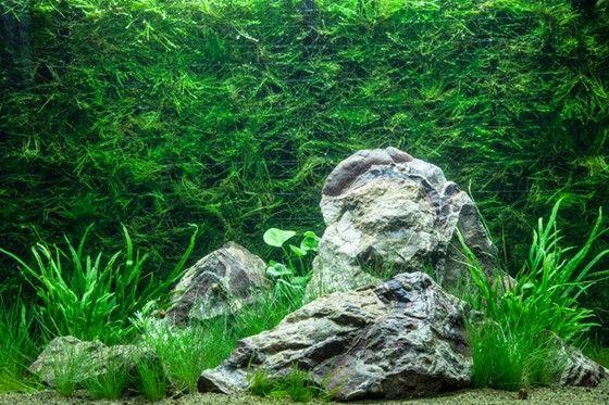 Layout 74 - Tropica - Tropica Aquarium Plants