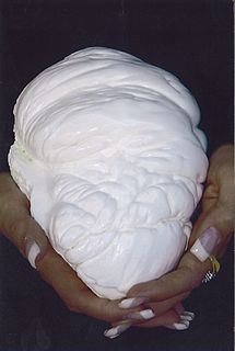 """The Pearl of Lao Tzu (also referred to as Pearl of Lao Tze [Philippines]) is the largest known pearl in the world. It is not a gem-quality pearl, but is instead what is known as a """"clam pearl"""" or """"Tridacna pearl"""" from a giant clam. It measures 24 centimeters in diameter (9.45inches) and weighs 6.4 kilograms (14.1lb). It is an interesting piece of natural history that has accumulated more than one story or legend.    While biologists would regard this object as a kind of pearl, gem..."""
