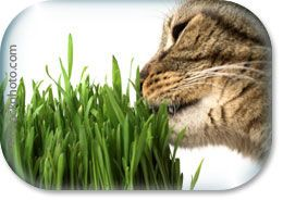 Plants for cats as well as a list of plants that are safe to have