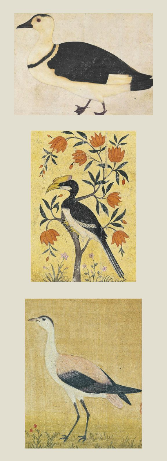 THREE PAINTINGS OF INDIAN BIRDS   INDIA, 19TH CENTURY OR LATER   Opaque pigments on paper, depicting a hornbill perched on a blossoming tree with large orange flowers, a black and white duck and a crane, each facing left, laid down on gilt cardboard with speckled borders, each individually mounted  Hornbill: painting 5 5/8 x 4in. (14.3 x 10.1cm.); panel 10 1/8 x 8½in. (22.7 x 21.5cm.)