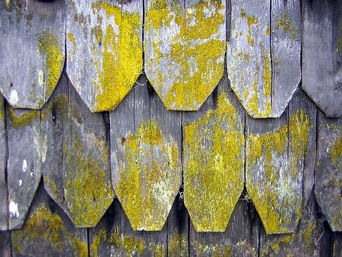 texturas by irubilardonoso, via Flickr