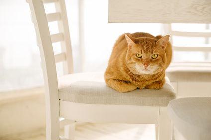 L'odeur de l'urine de chat est très désagréable et surtout très tenace, comment doit-on s'y prendre pour éliminer cette odeur? Voici une astuce de nos grands-mères qui s'avère très efficace.  Comment nettoyer un pipi de chat? Pour bien se débarrasser de l'odeur, essayez cette astuce: Vous aurez besoin: d'un verre, d'un papier absorbant, d'un... Lire l'article