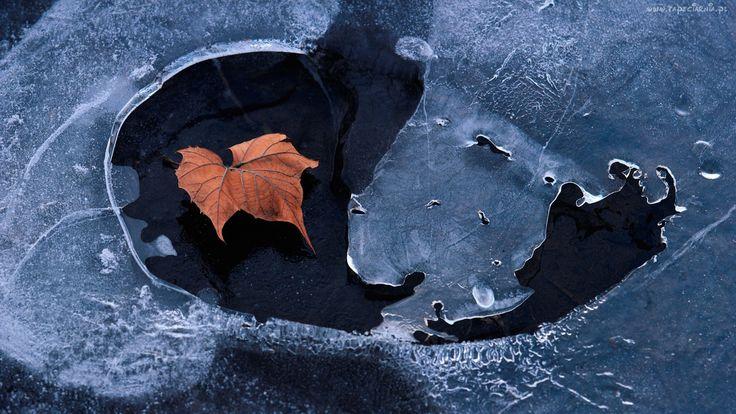 Jesień, Liść, Woda, Lód