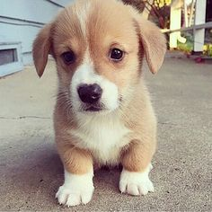 Cachorro muito fofinho