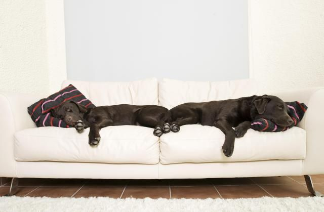 If you let your pets on the furniture you'll want to be sure to have it covered in a pet friendly fabric. Here are five that hold up well against scratches, stains and damage.