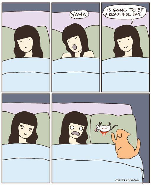 El amor de un gato