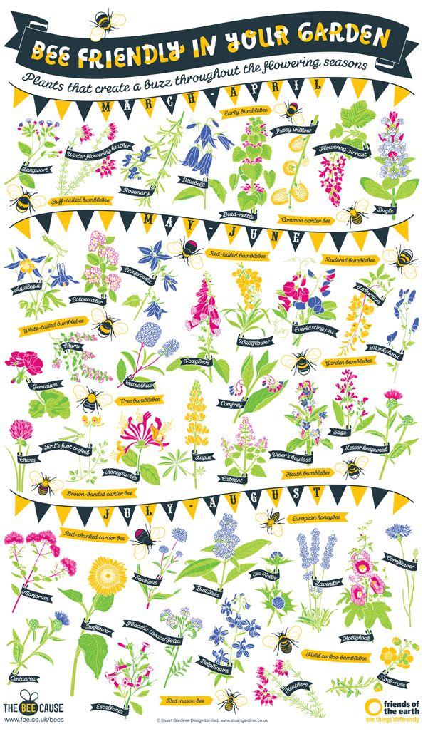 Bee Friendly Plants by Stuart Gardiner via romancingthebee. http://www.foeshop.co.uk/bee-friendly-poster.html #Infographic #Garden #Bees