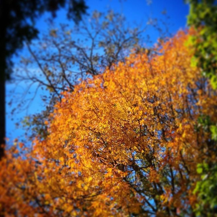 Good morning and Happy Thanksgiving!!!  Today I am thankful for so much from my family to our good health and warm home....and everything in between. I am also thankful for a stunningly sunny fall day!!!!!   Have a beautiful Thanksgiving! (And Ill see you a little later today Im sure ) . . . . . #thanksgivingday #thankfulness #thankfuleveryday #thanksgivingshouldbeeveryday #gorgeousfall #gorgeousfall #quotidien #lavieestbelle #profiter #writerslife #authorlife #momblogger #mumblogger…