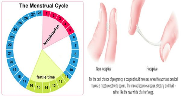 Learn How to Calculate Menstrual Cycle :http://naturalfoodteam.com/learn-how-to-calculate-menstrual-cycle/