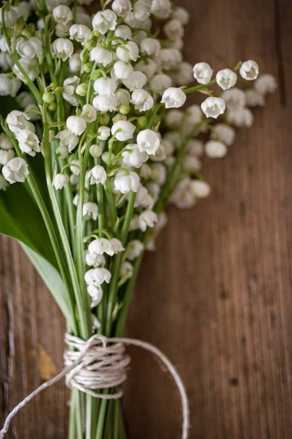 Lily of the Valley- ONE OF MY FAVORITE flowers!! <3 I cant wait to buy a house and have a million of these!!!!!!