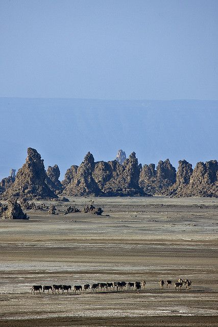 Donkeys in Abbe Lake, Djibouti | Flickr - Photo Sharing!