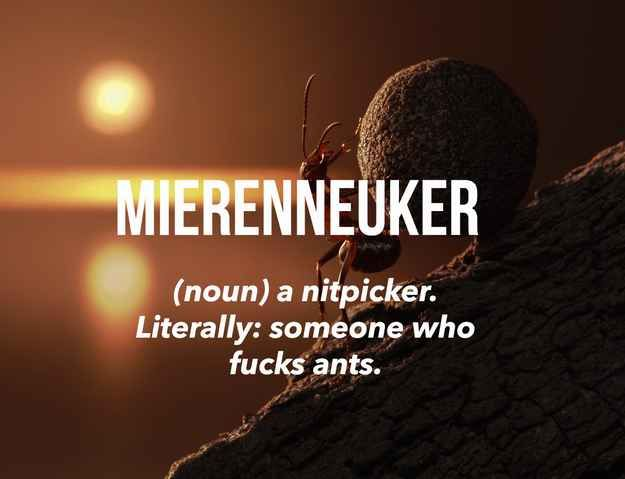 19 Utterly Bizarre Dutch Words You Need To Know About