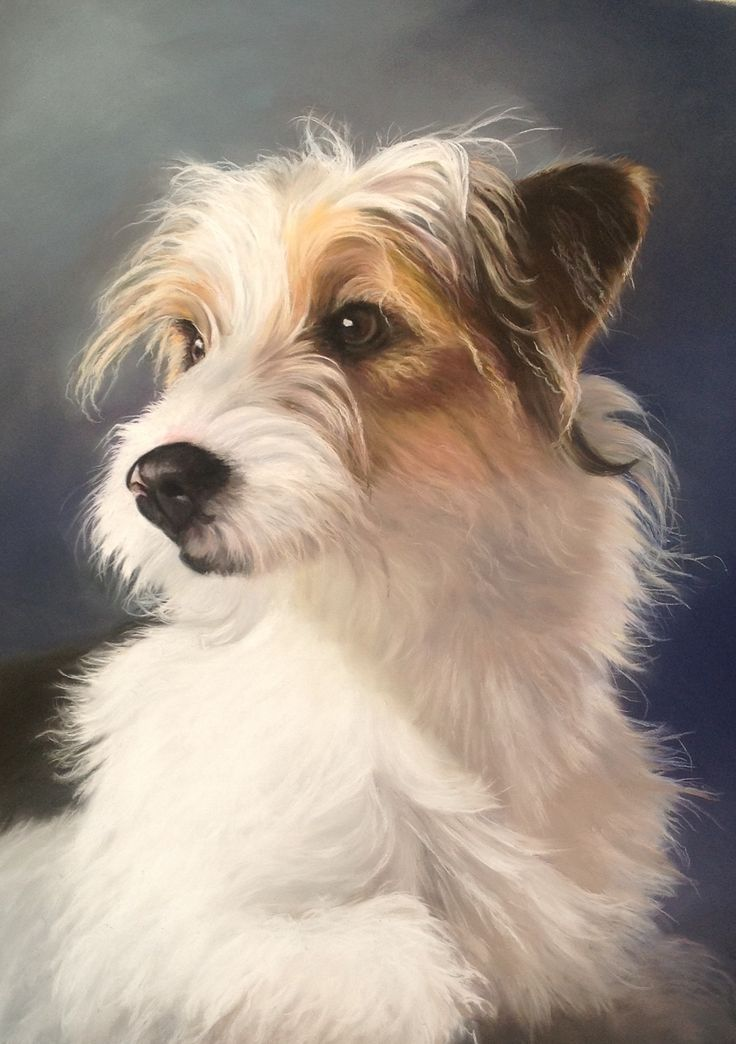 Taitti Portrait Of Jack Russell In Pastel Border Collie Excited Pee My Dog Refuses To Go To The Bathroom Outside Pot Dog Drawing Dog Paintings Animal Art