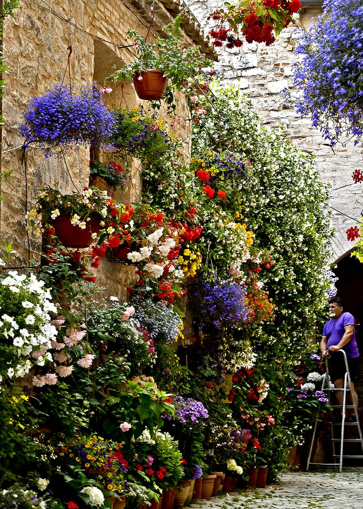 Spello province of perugia umbria italy favorite for Flower wall garden