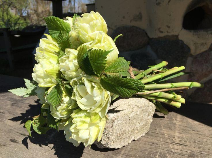 Organic tulips, Global Desire, vildevioler.dk