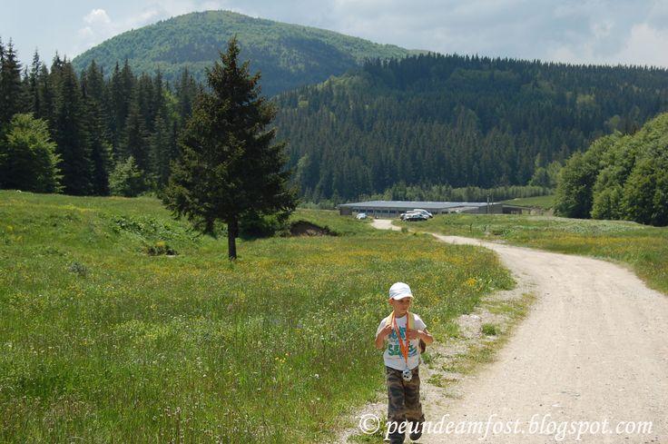 Pe unde am fost...: 2014.IUNIE.08 Plimbare pe Valea Berii