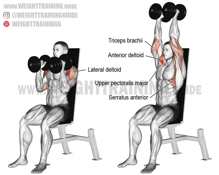 Seated neutral-grip dumbbell overhead press. A compound exercise. Target muscle: Anterior Deltoid. Synergists: Lateral Deltoid, Upper Pectoralis Major, Triceps Brachii, Middle and Lower Trapezius, and Serratus Anterior. Dynamic stabilizers (not highlighted): Biceps Brachii (short head only) and Triceps Brachii (long head).