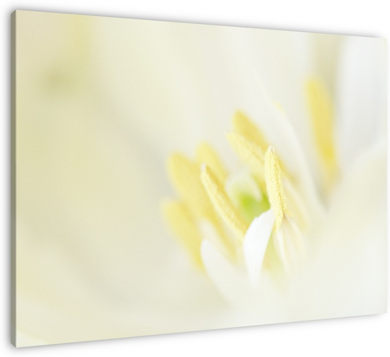 I added my first photo of a flower to my shop. Hope you like it!  http://renevos.werkaandemuur.nl/