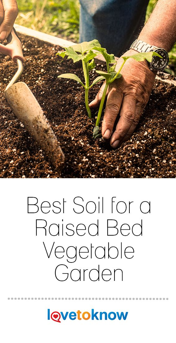 You Can Build The Best Soil For Growing Vegetables In A Raised Bed