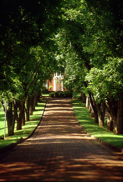Long brick drive.  Perfect.  Love the shady lane with the trees meeting in the middle.