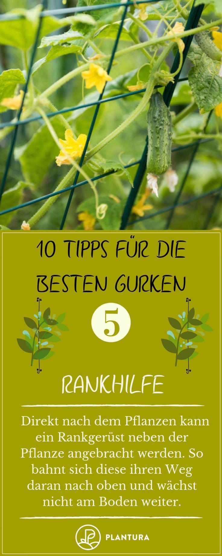 10 Tipps für die besten Gurken aus dem eigenen Garten