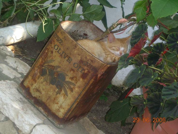 Kerkira, Ionion, Greece, 8.2008