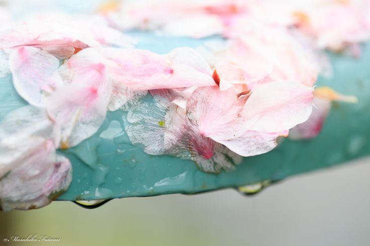 Blog / ブログ | Photographer Masahiko Futami / 写真家 二見匡彦