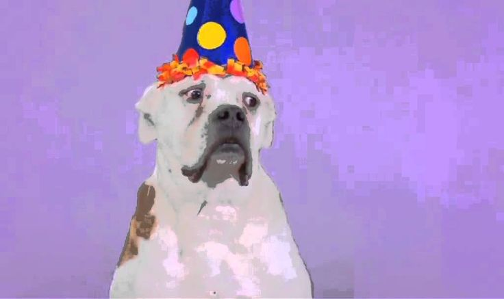 Happy Birthday Song, Dogs Style!