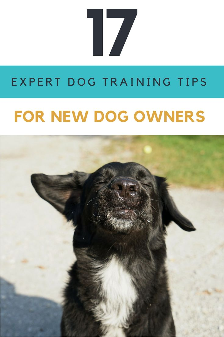 17 Expert Dog Training Tips For New Dog Owners