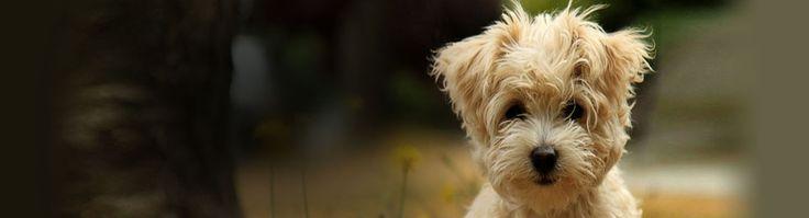 Residential Dog Training Lancashire - http://www.dog-ramblers.co.uk/dog-obedience-training-southport/