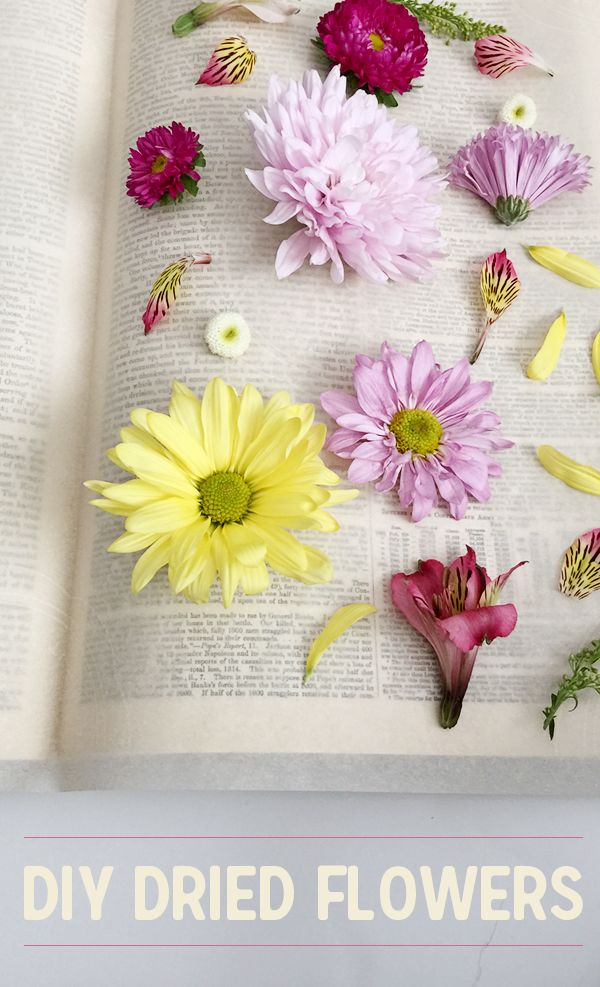 how to dry cut flowers